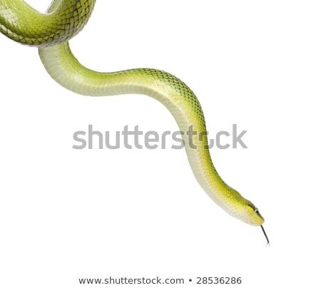 serpente · padrão · preto · e · branco · estilo · moda · abstrato - foto stock © klinker