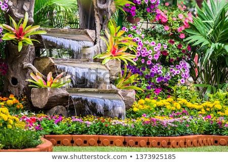 Jardin cascade parc arbres vert Photo stock © hraska