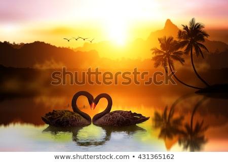 Liefde meer zonsondergang illustratie vogels Stockfoto © adrenalina