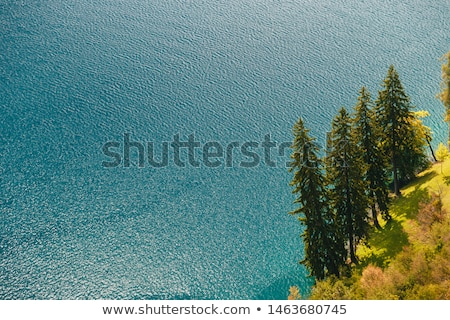 Aerial view of pine and fir trees by lake Bled Stock photo © stevanovicigor