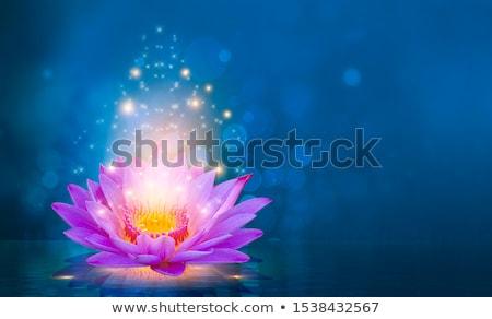 紫色 蓮 黒 花 自然 ストックフォト © blackmoon979