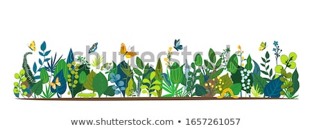 Caterpillars and butterflies in the garden Stock photo © bluering