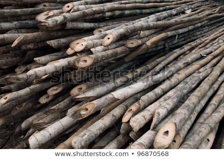 Friss bambusz vág fű erdő fal Stock fotó © tang90246