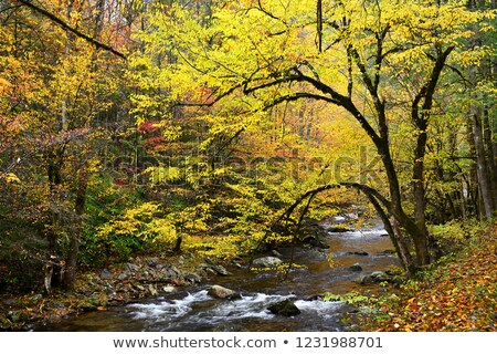 Autumn on Little Pigeon River Stock photo © GreenStock