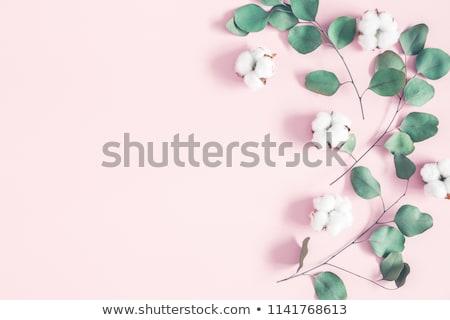 floral · folhas · aves · linear · estilo · vetor - foto stock © Elensha