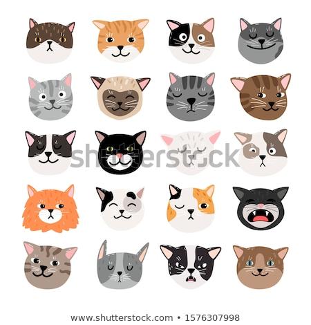 猫 表 面白い 猫 ストックフォト © spanishalex