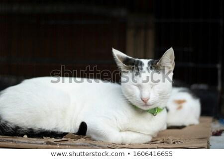hoofd · klein · kat · geïsoleerd · witte · baby - stockfoto © popaukropa