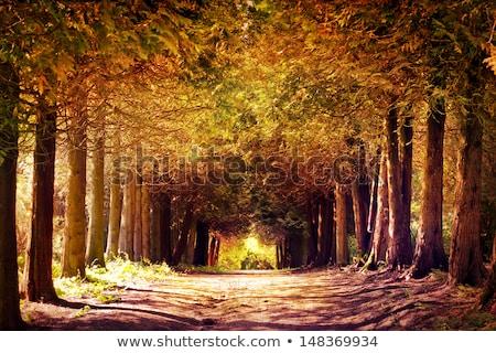 Drogowego dżungli wygaśnięcia stylizowany lasu słońce Zdjęcia stock © tracer