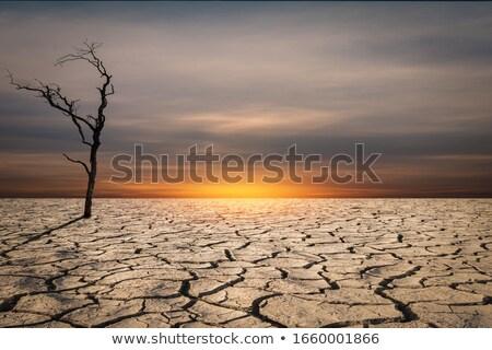 Wyschnięcia gruntów krajobraz ilustracja niebo słońce Zdjęcia stock © bluering