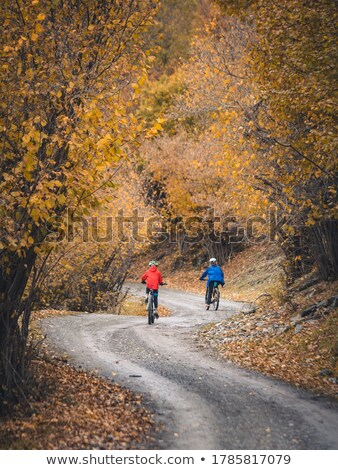 Autumnal forest in the Pyrenees Stock photo © pedrosala