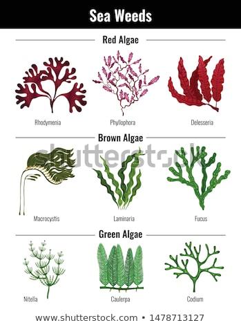 sea or aquarium algae types color illustration set stock photo © robuart