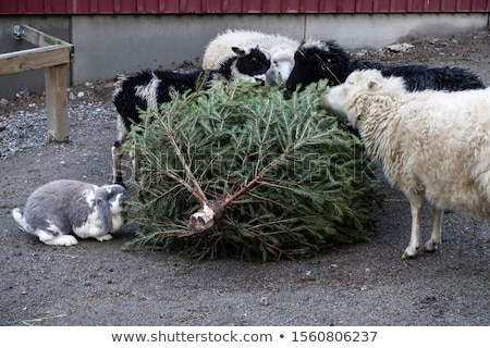 Christmas tree with animals Stock photo © Ustofre9