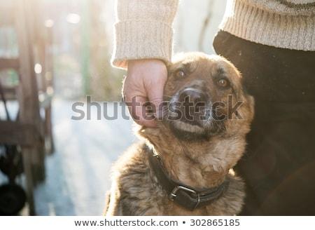 Man cuddling with his dog in winter Stock photo © Kzenon