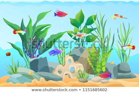 Neon Tetra Green Tiger Barb Vector Illustration Stock photo © robuart