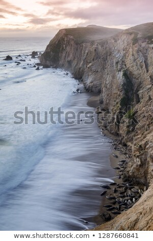 California Sea Lions on the beaches of Chimney Rock with crashing waves of the Pacific Ocean during  Stock photo © yhelfman