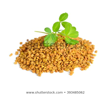 Sprouted fenugreek seeds in a white bowl Stock photo © madeleine_steinbach