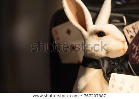 Sinistro piccolo coniglio cartoon illustrazione guardando Foto d'archivio © cthoman