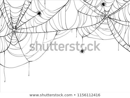 Fekete szakadt pókháló fehér halloween szimbólum Stock fotó © orensila