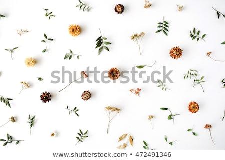 Fehér gratulálok őszi levelek fa természet tájkép Stock fotó © Alkestida