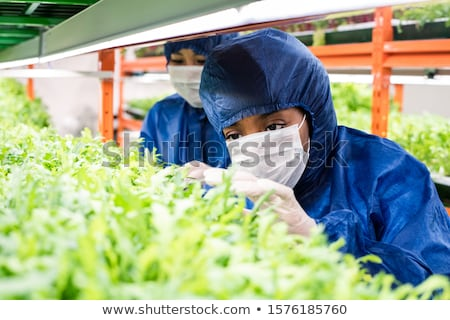 Young gloved Asian female in workwear taking care of green seedlings Stock photo © pressmaster