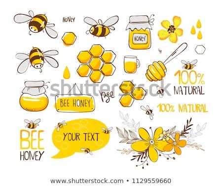 Vetor conjunto abelha favo de mel natureza animal Foto stock © olllikeballoon