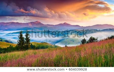 photo nature stock photo © redpixel