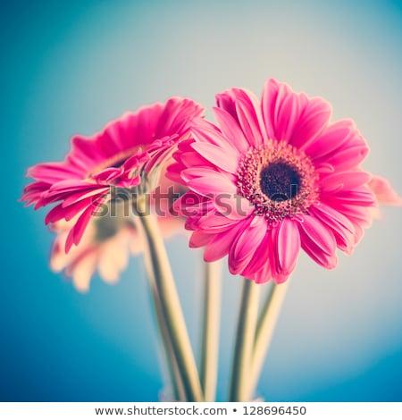 Flowers and parchment stock photo © Marisha