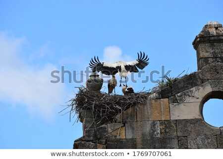 a few of the stork nest stock photo © justinb