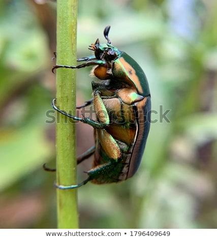 Böcek stüdyo makro atış geri katı Stok fotoğraf © macropixel