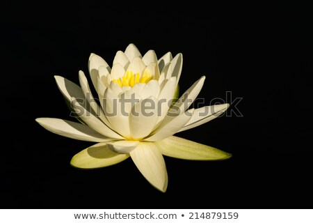 Lily agua flor parque ontario Foto stock © ca2hill