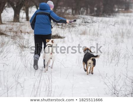 black mixed breed dog half setter stock photo © eriklam