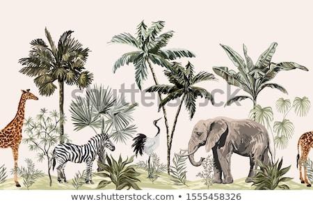Жирафы · резерв · парка · Африка · животного · природы - Сток-фото © mariephoto