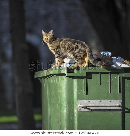 бездомным · кошек · еды · мяса · продовольствие · черный - Сток-фото © hofmeester