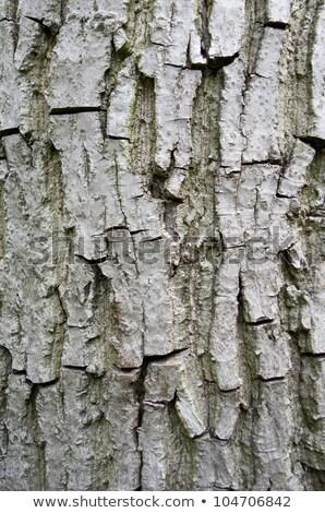 écorce arbre résumé fond vie usine Photo stock © Zerbor