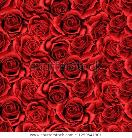 girl in red roses stock photo © fisher