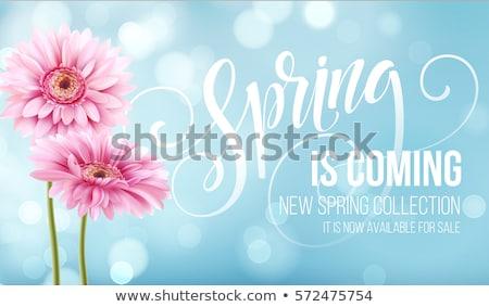 Roxo flor da primavera flor projeto folha fundo Foto stock © isveta