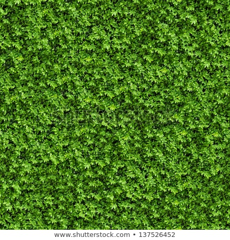 Green Grass. Seamless Tileable Texture. Stock photo © tashatuvango