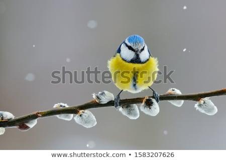 Azul teta água banho potável Foto stock © ivonnewierink