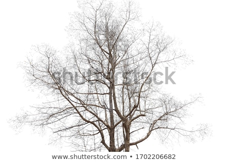 Baum · Tod · junger · Mann · stehen · Spitze · Klippe - stock foto © frameangel