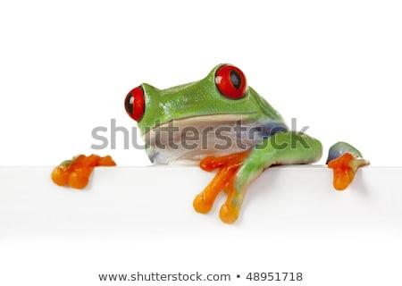 Сток-фото: Frog Banner Sign