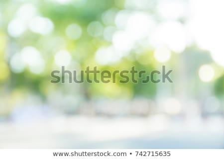 ぼかし · 緑 · テクスチャ · 太陽 · 抽象的な · 光 - ストックフォト © italianphoto