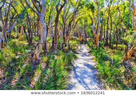 Bushwalking in Jervis Bay National Park Stock photo © lovleah