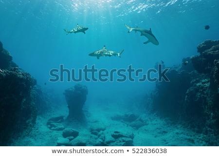 Tiburón natación mar luz del sol sonrisa grupo Foto stock © adamfaheydesigns
