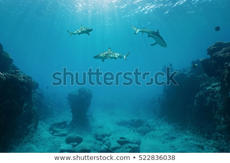Shark swimming under the sea with sunlight Stock photo © adamfaheydesigns