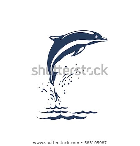 golfinho · logotipo · modelo · projeto · companhia · corporativo - foto stock © antoshkaforever