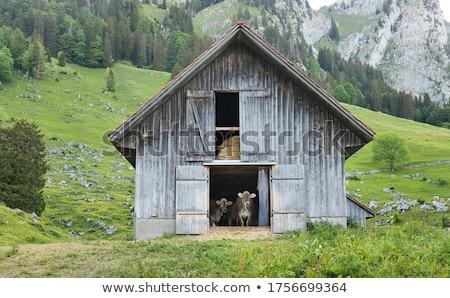 Stodoła krowy stałego mleka zbiornika tropikalnych Zdjęcia stock © bluering