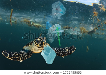 environmental issues stock photo © devon