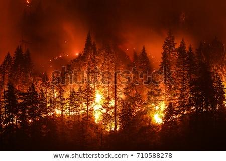 ardente · floresta · pôr · do · sol · noite · cérebro · preto - foto stock © bluering