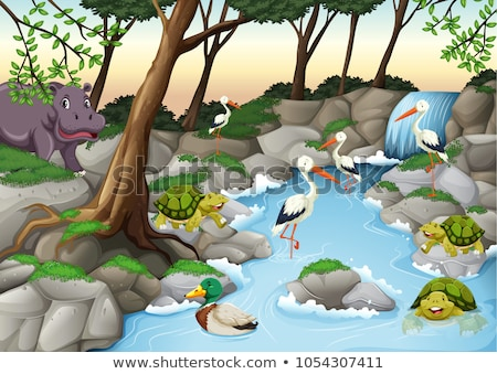 Turtles and ducks at the river Stock photo © bluering