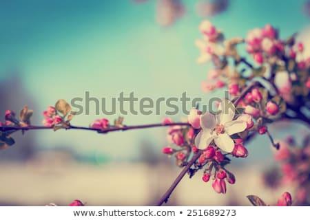 Boomgaard voorjaar tijd blauwe hemel landschap tuin Stockfoto © meinzahn